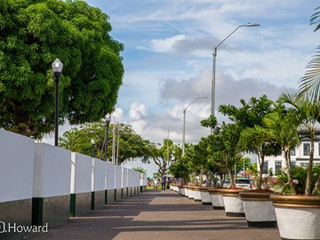 Top 10 Green Paramaribo Photo walk